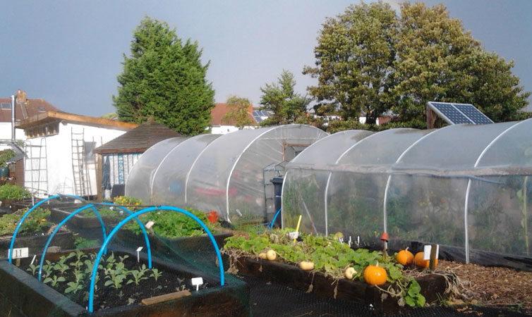 Greenhouse or Polytunnel Gardening