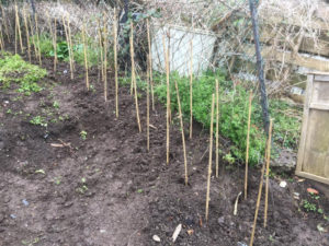 Birchall Road allotment site new hedge 2018