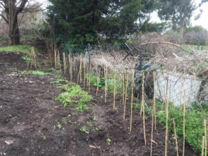 Birchall Road allotment site newly recovered plot 2018