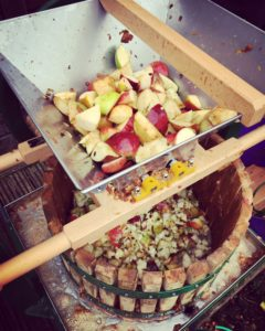 Scratting cider apples