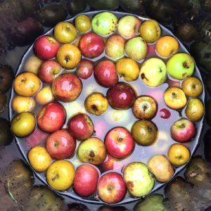 Cider making - washing apples