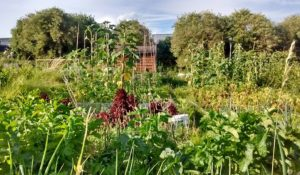 Plot Availability & Prices