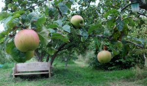 Horfield Organic Community Orchard