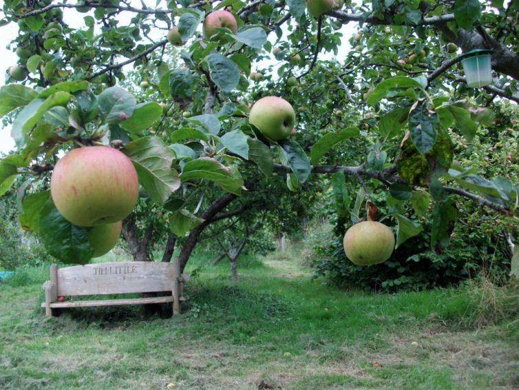 Horfield Organic Community Orchard