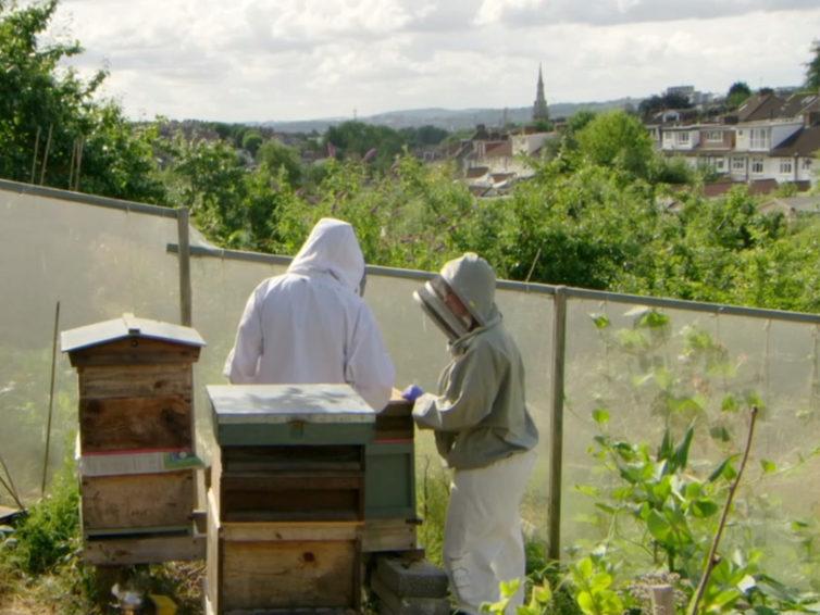 Beekeeping on Allotments