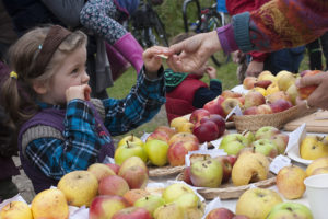 Apple Day at the Horfleld Organic Community Orchard