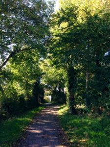 Donkey Lane in Autumn